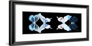 Miss Butterfly X-Ray Duo Black Pano VIII by Philippe Hugonnard