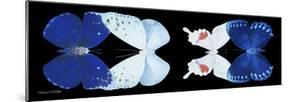 Miss Butterfly X-Ray Duo Black Pano XII by Philippe Hugonnard