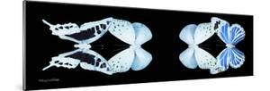 Miss Butterfly X-Ray Duo Black Pano XIII by Philippe Hugonnard