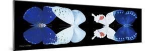 Miss Butterfly X-Ray Duo Black Pano by Philippe Hugonnard