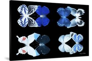 Miss Butterfly X-Ray Duo Black V by Philippe Hugonnard