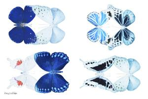 Miss Butterfly X-Ray Duo White V by Philippe Hugonnard