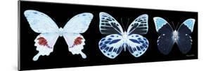 Miss Butterfly X-Ray Panoramic Black II by Philippe Hugonnard
