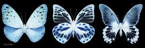 Miss Butterfly X-Ray Panoramic Black III by Philippe Hugonnard