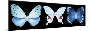 Miss Butterfly X-Ray Panoramic Black IV by Philippe Hugonnard