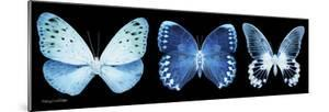 Miss Butterfly X-Ray Panoramic Black by Philippe Hugonnard