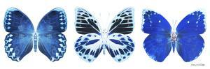 Miss Butterfly X-Ray Panoramic White II by Philippe Hugonnard
