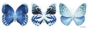 Miss Butterfly X-Ray Panoramic White III by Philippe Hugonnard
