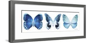 Miss Butterfly X-Ray Panoramic White IV by Philippe Hugonnard