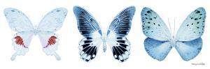 Miss Butterfly X-Ray Panoramic White by Philippe Hugonnard