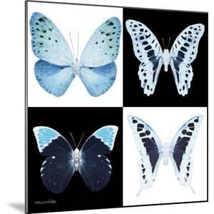 Miss Butterfly X-Ray Square by Philippe Hugonnard