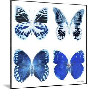 Miss Butterfly X-Ray White Square II by Philippe Hugonnard