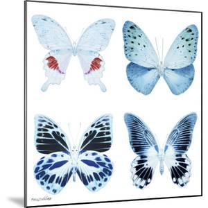 Miss Butterfly X-Ray White Square by Philippe Hugonnard