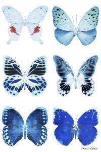 Miss Butterfly X-Ray White by Philippe Hugonnard