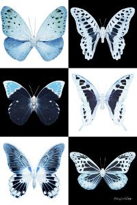 Miss Butterfly X-Ray by Philippe Hugonnard