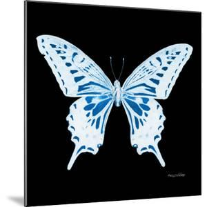 Miss Butterfly Xuthus Sq - X Ray Black Edition by Philippe Hugonnard