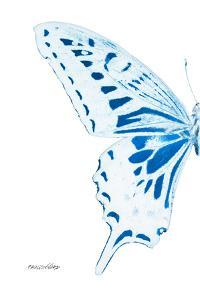 Miss Butterfly Xuthus - X Ray Left White Edition by Philippe Hugonnard