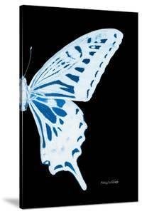 Miss Butterfly Xuthus - X Ray Right Black Edition by Philippe Hugonnard