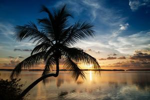 Palm Paradise at Sunset - Florida - USA by Philippe Hugonnard