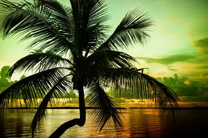 Palm Tree at Sunset - Florida by Philippe Hugonnard