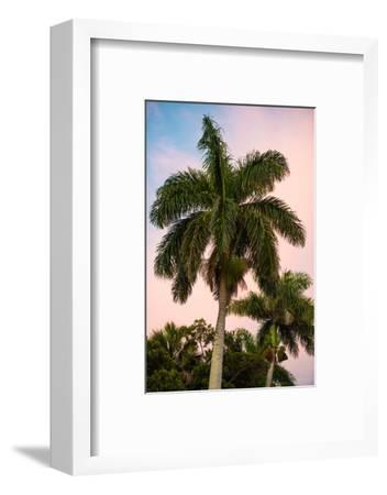 Palm Trees at Sunset - Florida