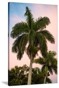 Palm Trees at Sunset - Florida by Philippe Hugonnard