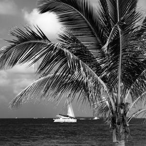 Paradise Palm Tree with a Sailboat on the Ocean - Florida by Philippe Hugonnard