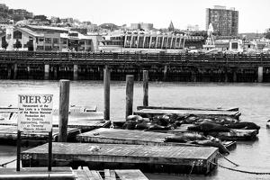 Pier 39 - Fisherman's Wharf - San Francisco - Californie - United States by Philippe Hugonnard