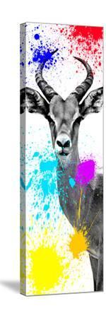 Safari Colors Pop Collection - Antelope Impala II