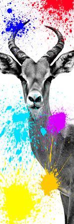 Safari Colors Pop Collection - Antelope Impala II by Philippe Hugonnard