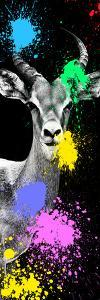 Safari Colors Pop Collection - Antelope Impala Portrait III by Philippe Hugonnard