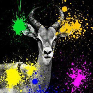 Safari Colors Pop Collection - Antelope Reedbuck IV by Philippe Hugonnard