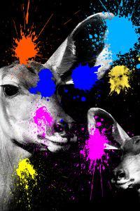 Safari Colors Pop Collection - Antelopes Portrait by Philippe Hugonnard