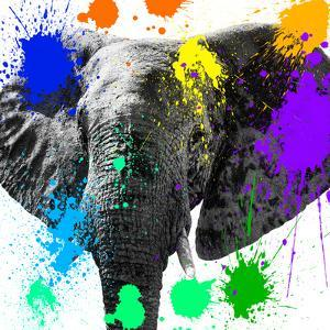 Safari Colors Pop Collection - Elephant II by Philippe Hugonnard