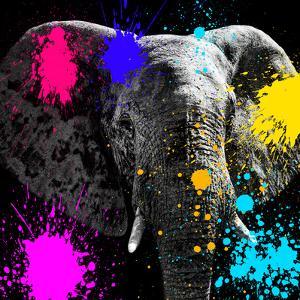 Safari Colors Pop Collection - Elephant III by Philippe Hugonnard