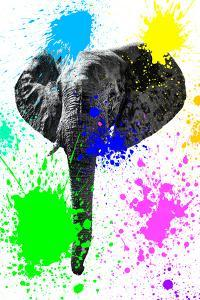 Safari Colors Pop Collection - Elephant IV by Philippe Hugonnard