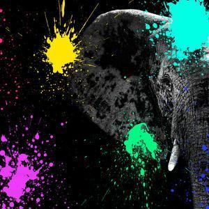Safari Colors Pop Collection - Elephant Portrait II by Philippe Hugonnard