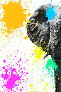 Safari Colors Pop Collection - Elephant Portrait III by Philippe Hugonnard