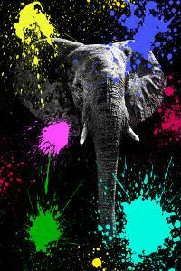 Safari Colors Pop Collection - Elephant V by Philippe Hugonnard