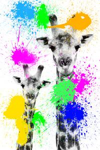 Safari Colors Pop Collection - Giraffes Portrait III by Philippe Hugonnard
