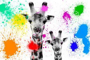 Safari Colors Pop Collection - Giraffes Portrait by Philippe Hugonnard