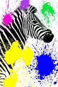 Safari Colors Pop Collection - Zebra Profile by Philippe Hugonnard