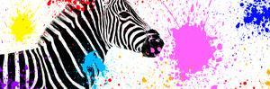 Safari Colors Pop Collection - Zebra VII by Philippe Hugonnard