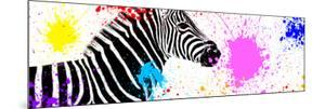 Safari Colors Pop Collection - Zebra VII by Philippe Hugonnard