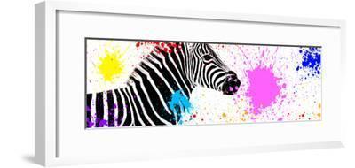 Safari Colors Pop Collection - Zebra VII