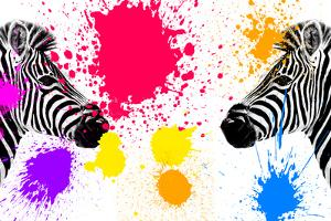 Safari Colors Pop Collection - Zebras Face to Face IV by Philippe Hugonnard