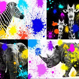 Safari Colors Pop Collection by Philippe Hugonnard