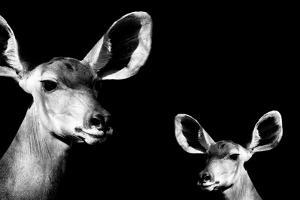 Safari Profile Collection - Antelope and Baby Black Edition II by Philippe Hugonnard