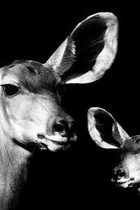 Safari Profile Collection - Antelope and Baby Black Edition VI by Philippe Hugonnard