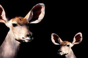 Safari Profile Collection - Antelope and Baby Black Edition by Philippe Hugonnard